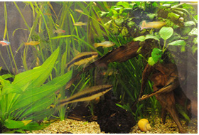 Das Aquarium in der Praxis